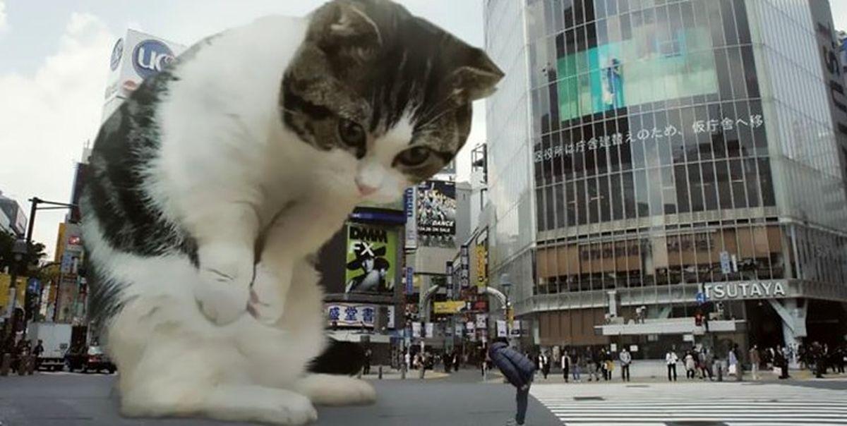 تبلیغات ژاپنی با گربه غول پیکر+ فیلم