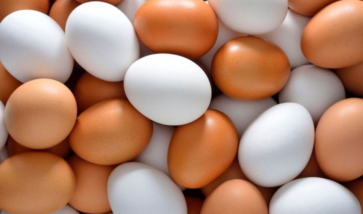 تخم مرغ را کجا نگه داری کنیم؟